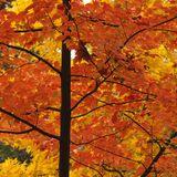 Luke Whibley - Autumn 2012 Mix