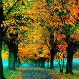Autumnsphere