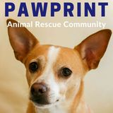 167: Bay Area Pet Fair 2018 Part 2: Brandy Sled Dog Rescue and Others