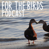 For the Birds Podcast - Episode 04 - Shorebirds, Allies, Plastic Pollution, and Climate Change