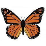 Missing Mariposa