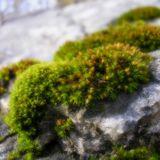rain on moss