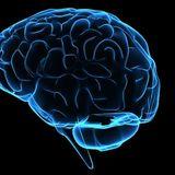 John Evil - Welcome to my Brain