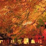 in the lengthening nights of autumn _秋の夜長