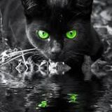 The Witches Kittens - written and read by Siusaidh Ceanadach