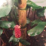 Habu Snakes, Lava, Limited Modes Of Transposition... (21.06.19) w/ Ediçoes CN