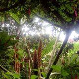 WEB Session en Parador Darwin - Cucao - Chile (Dj Rüstico Deep Session)