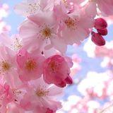 DJ Mike Iova - Flower Breeze (March 2014 Mix)
