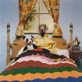 Spik - From jazz to dog -