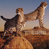 MissCharo - Ilumina @Cuatro Reinas 6.9.14