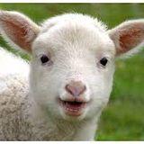 The Lamb's Tale - Beats From The Baaaa
