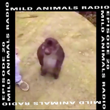 Mild Animals w/ Marsellus Wallace - 2nd November 2018