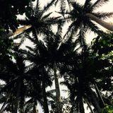 Orionbeats Reaches the Jungle Mix