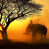 riccicomoto's audio selfdefence - safari