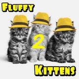 Fluffy Kittens - 2nd Kitten