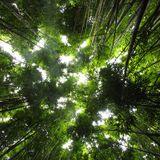 Dark Tropics - feat. Idan K, Roots Manuva, Zulu, Joyce Muniz, Daniel Haaksman, Coleman Brothers