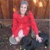 County Animal Services   Dazzle Dog Delight Radio Show
