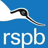 Saving the spoon-billed sandpiper