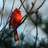 Winter Garden 236: Ambient + Chill