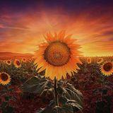 Digital Sunrise - Promo Mix for Rising Spring
