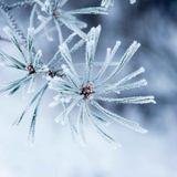 QTAN số 12 - Câu chuyện mùa đông