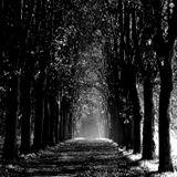 No vayas al bosque sola [23-11-12]