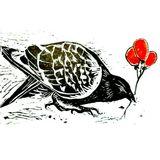 Latin Bird