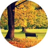 Pavel Costaneto – walk in the autumn park
