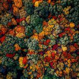 Kaleidosound w/ Flora + Michael Iwatsu - 15th December 2017