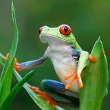 GO!DIVA Classics meets Costa Rica Rainforest