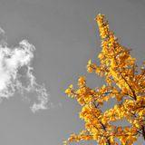Cloud Appreciation Mix