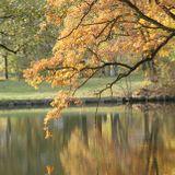 Das Fallen der Blätter .... 6.11.12