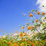 Sunshine, Birds & Bloom Mix