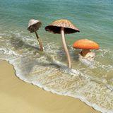 Fungus Beach