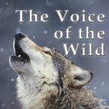 Voice of the Wild - 3-23