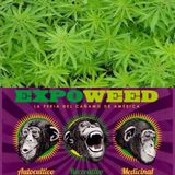 Marihuana, Ley 20 mil y ExpoWeed