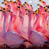 Wild Flamingos ~ Live Set