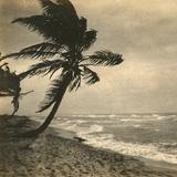 tropical persuasions