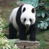Animal magnetism and conservation by Jack Werner