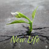 New Life: Christ is Risen! Easter Sunday 04/01/18 Dr. Brad Morgan
