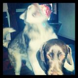 Atomic Dog v Ghetto Love