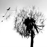 Windeskind live @Hausbar Lahr 02.12