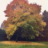 1st Autumnvibes