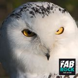 La fabrock | S02E10 | Hedwig's Spitlord | 20141106