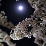 Blossom Full Moon Medicine Dance Opening Set