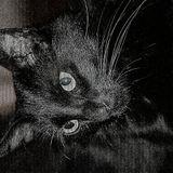DhARK_2014_opaqueDétendre_2014-03-30_3h21m22.mp3