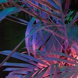 Nuits Des Tropiques...les nuits #03