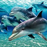 Music For Dolphins