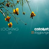 catalyst: looking up (live from Dogglounge.com)