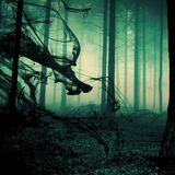 Dark Psytrance/Forest Mix (27.11.2013)